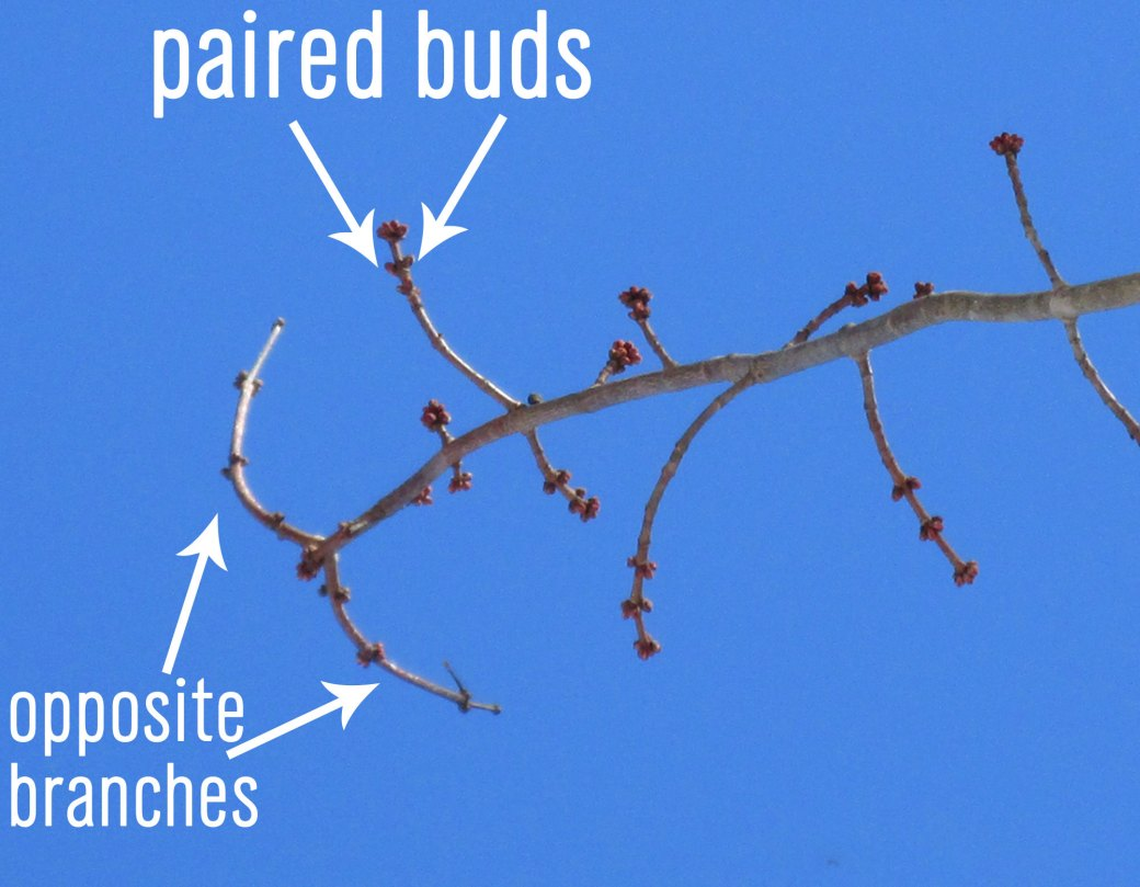 paired-buds3