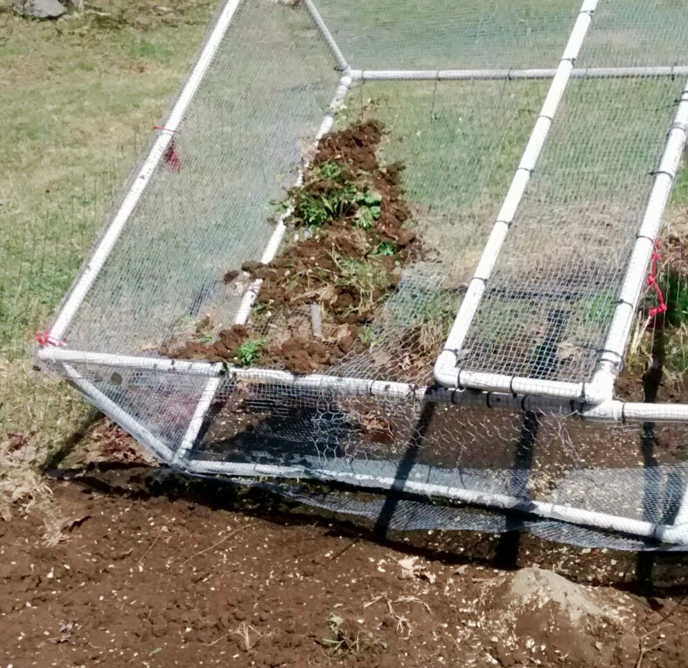Chicken Tractor Screening Soil