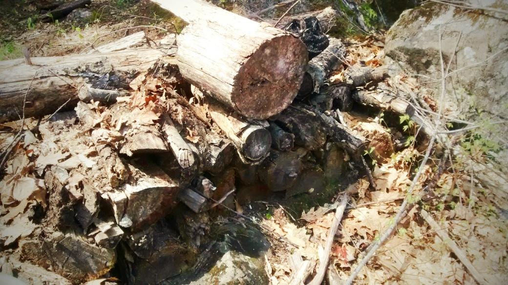 rotting log pile for hügelkultur