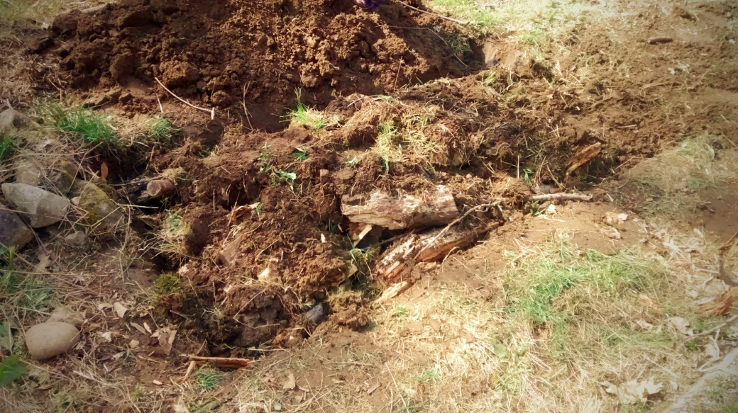 adding sod to logs for Hügelkultur raised garden bed