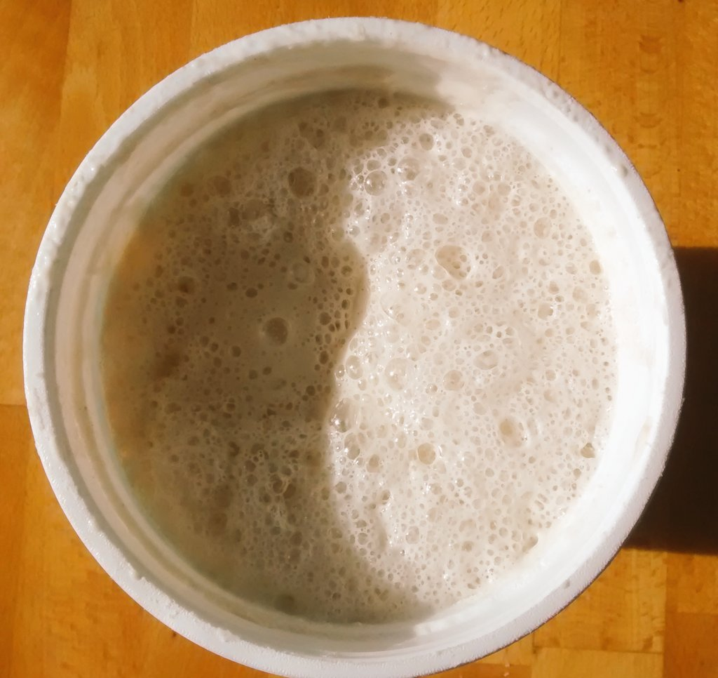 Wild yeast sourdough actively foaming