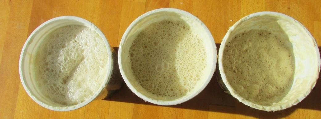 wild yeast sourdough cultures bubbling away