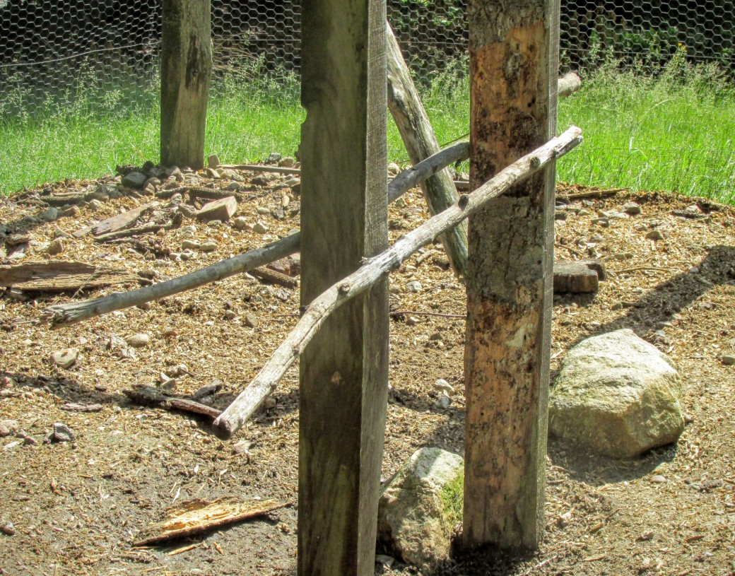 Roosting poles for chickens made from branches