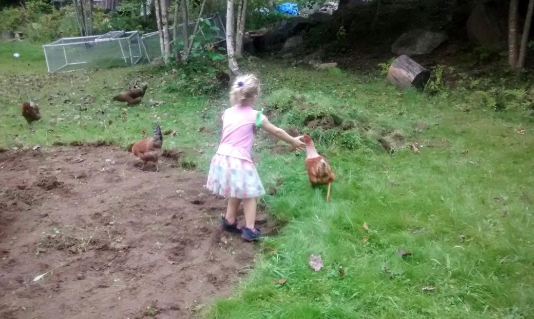 girl chasing chickens