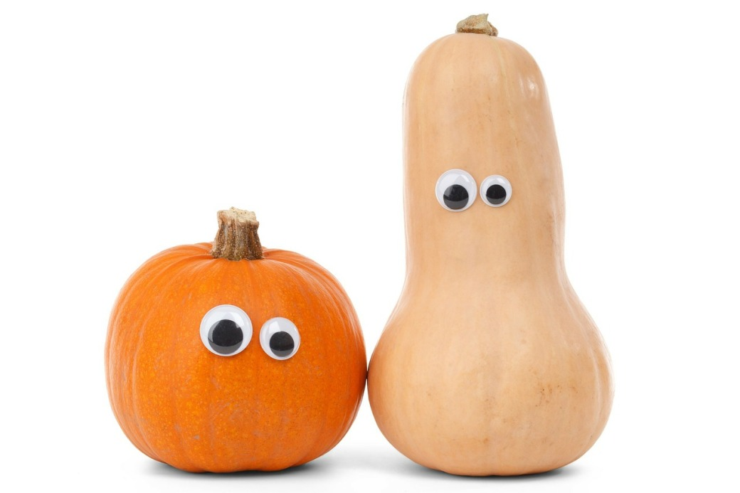 squash vs. pumpkin