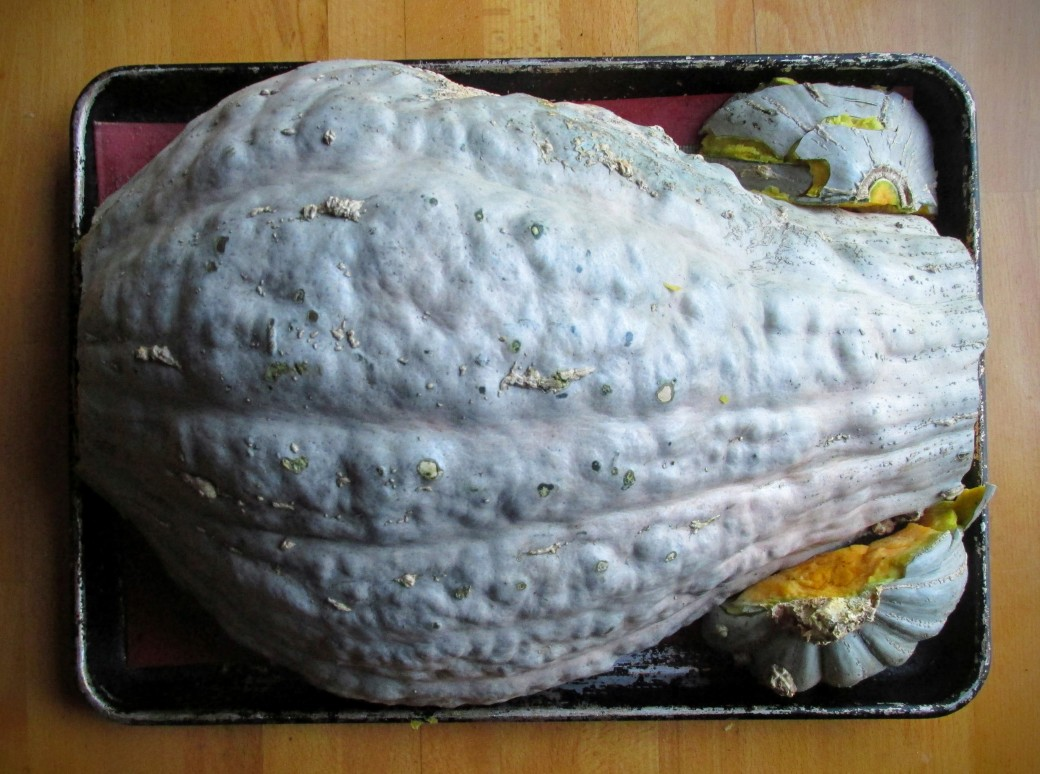 fitting a hubbard squash in a pan