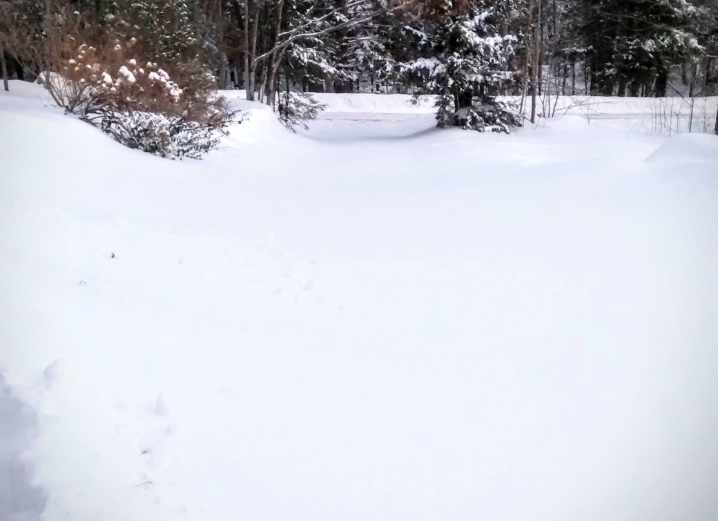 8 inches of fresh snow covering our driveway