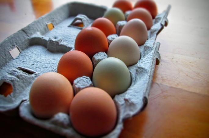 free range organic fed eggs