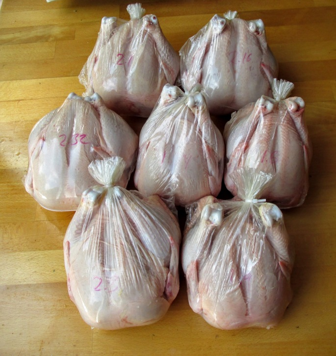 pasture raised organic fed cornish game hens ready for pickup