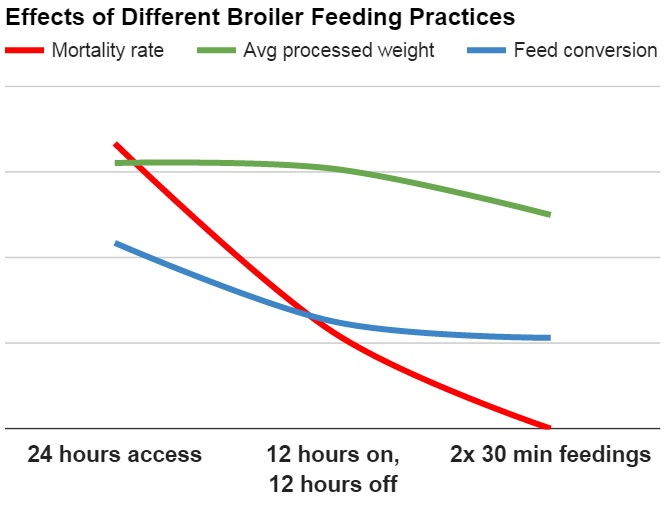 Effects Of Different Broiler Feeding Practices on mortality, weight yielded, and feed conversion rates